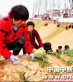 中铁一局厦门公司开封乡村振兴项目助力农民致富